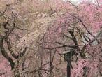 03-miyamoto-p4060456.jpg