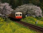 fukuda-p4062372ts.jpg