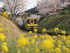 031-nakagawa-p110411_0281jpg.jpg