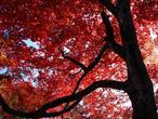 uchida_arashiyama-01.jpg