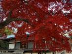 uchida_niwadera-01.jpg