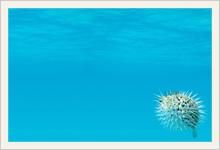 スクリーンセーバー 無料 ダウンロード 海