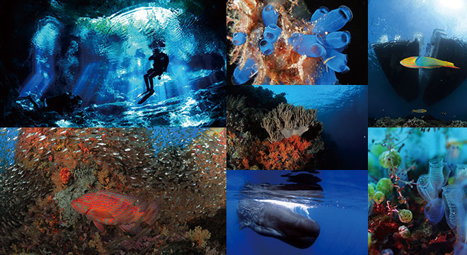 UNDERWATER PHOTO GALLERY The Beauty Below