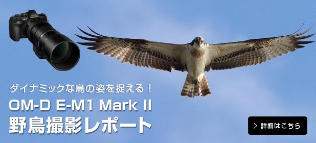 ダイナミックな鳥の姿を捉える!OM-D E-M1 Mark II 野鳥撮影レポート