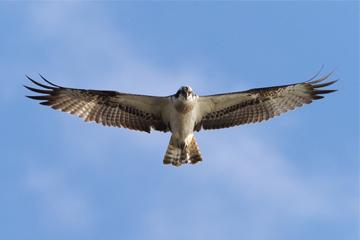 鳥の写真投稿|Fotopus(写真コミュニティフォトパス)|オリンパス
